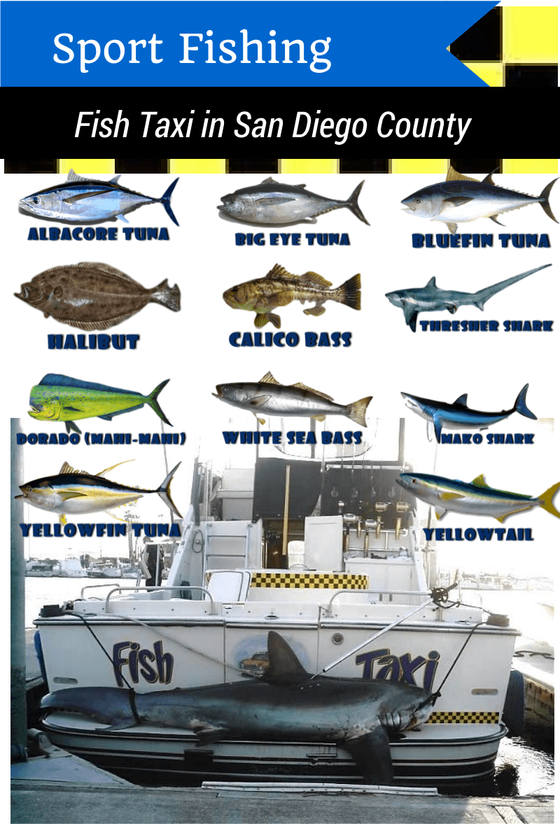 Fish names fish taxi for Fishing license san diego