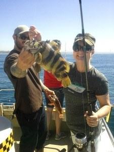 striped bass 225x300 - Fish Taxi Oceanside CA Album