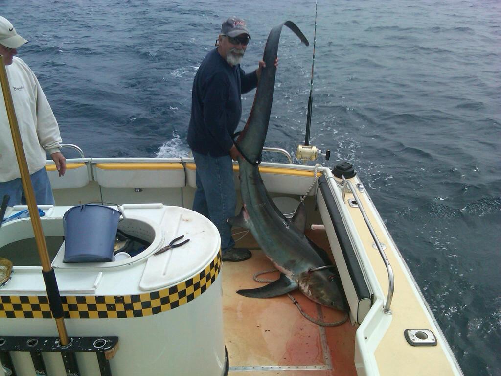 Thresher Shark Fish Taxi